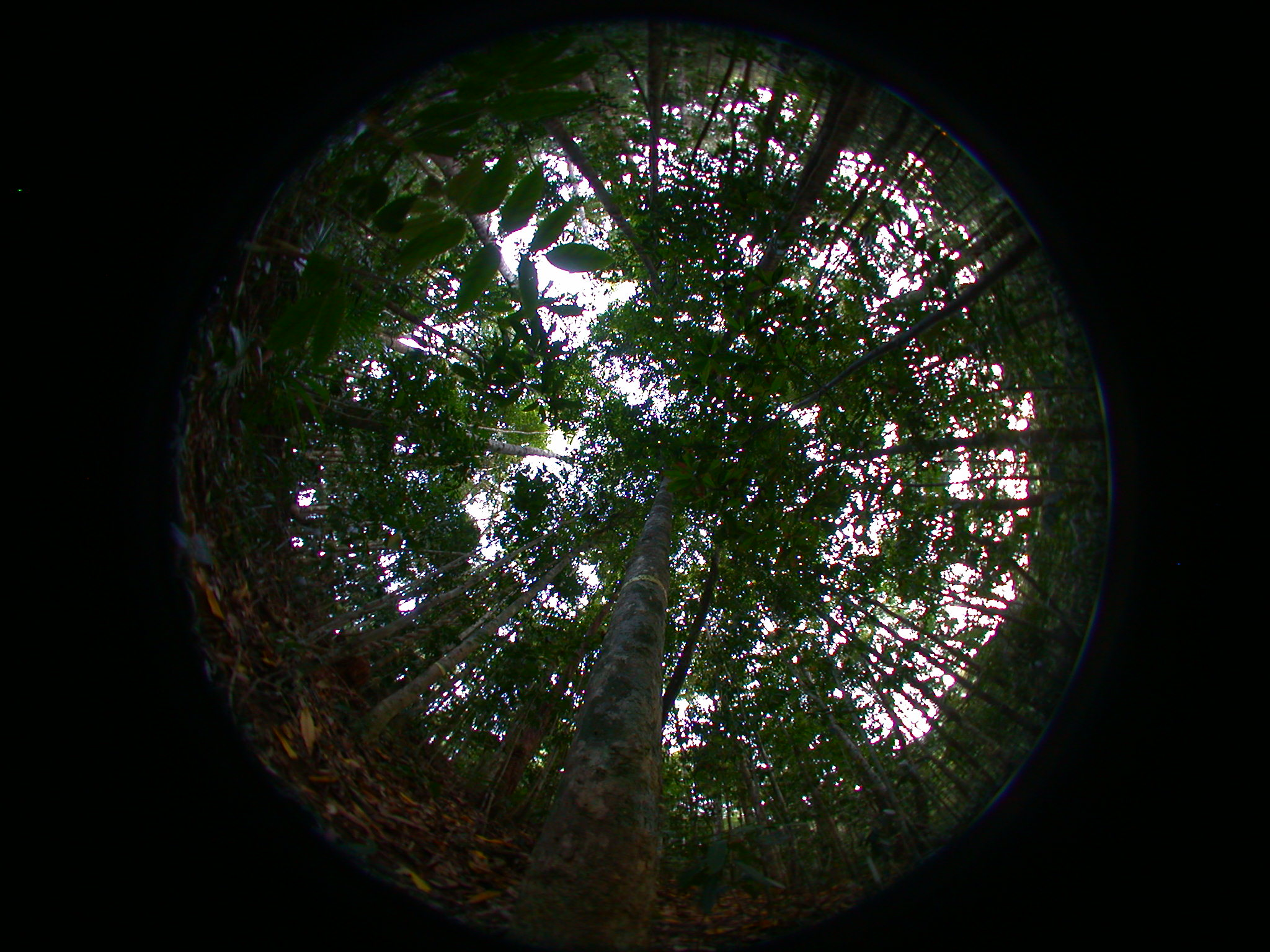 properties of plants in the forest A recent paper presents an algorithm that may be used to predict the future dynamics of plant communities of plants, like a forest properties of plants.
