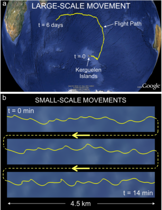 The trajectory of a monitored albatross, traveling over the Indian Ocean. Credit: Sachs et al.