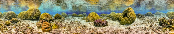 Figure 4: Gigapixel 360-degree underwater panorama from the reef in Ofu. Printed on a large canvas, this image can be used as a life-size corridor for the visitors to walk in.
