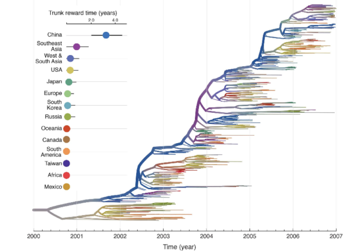 A tree representation of genetic relationships between H3N2 influenza viruses from 2002 to 2007. The thicker line on the tree represents the successful evolutionary trunk lineage that gives rise to all influenza strains over time. The tree is colored according to estimated geographic location, indicating high permanence of the trunk in China and Southeast Asia. Figure courtesy of Lemey P, Rambaut A, Bedford T, Faria N, Bielejec F, et al.