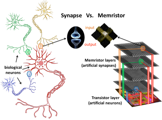 Organization of the biological brain (based on neurons and synapses) versus organization of a computer chip capable of artificial neural computation (based on transistors and memristors).The memristor resembles the synapse because it has two terminals (an input and an output) and can change its electrical resistance in an analog fashion.