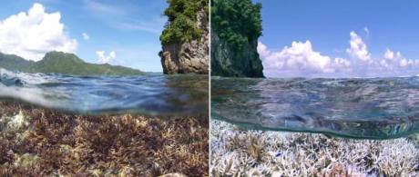 A before and after image of the bleaching in American Samoa. The first image was taken in December 2014. The second image was taken in February 2015 when the XL Catlin Seaview Survey responded to a NOAA coral bleaching alert. (Credit: XL Catlin Seaview Survey)